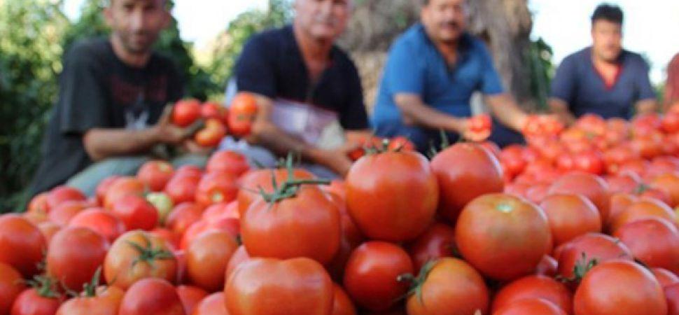 Rusya, Türkiye\'den domates ithalatını 2 kat artırıyor