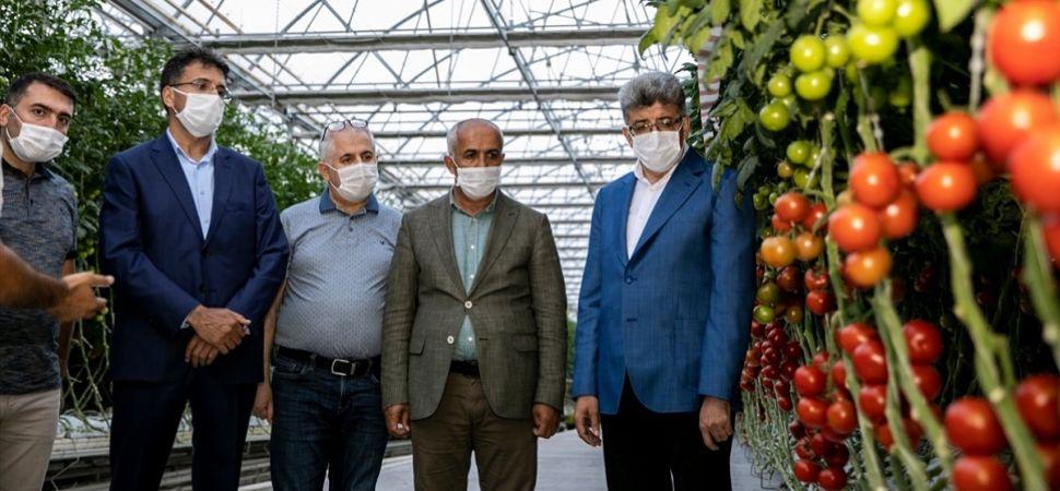Van'da Üretilen Domatesler Antalya'ya Gönderiliyor
