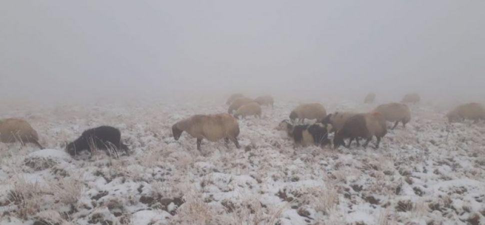Başkale de Kar yağışı çobanları hazırlıksız yakaladı.