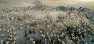 İlçemizde Görüntüler  Göçerlerin Yaşamı Koyun sürüsü