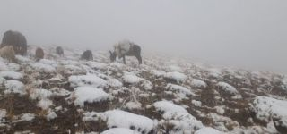 Başkale'de mevsimin ilk karı yağdı