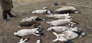 Başkale de Damı çöken ahırdaki 12 küçükbaş hayvan telef oldu