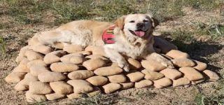 Başkale'de çuvallarla toprağa gömülü 233 kilo eroini 'Barut' buldu